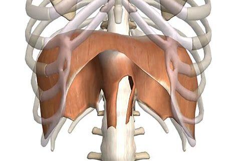 La respirazione diaframmatica. Tra voce e reflusso (seconda parte)